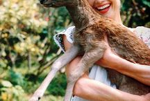 Audrey Hepburn / Audrey with animals