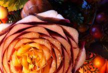 Flora / Fiori e di più