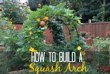 How to build an arch for squash
