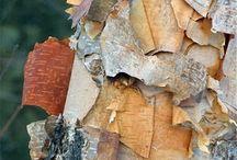 Corteccia la pelle dei tronchi... / Texture dalla natura