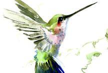 kolibřici