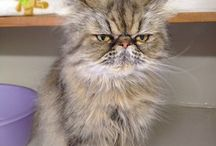 Feline Friends / This is a collection of cats who have visited our cattery.