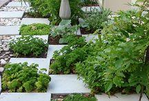 Gardening / by Lindsay Godfrey