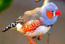PTAKI / Birds of the world.