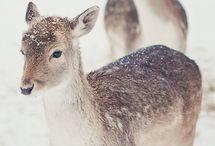 Winter! / Cold Days Warm Heart