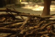 Ayahuasca TV / Ayahuasca TV collects the best in Ayahuasca video that's  scattered across the web and brings it together in one place. Ayahuasca TV's commentary and reviews highlight curious occurrences within certain videos and targets other interesting tidbits that are related to the world of ayahuasca. If you know of any great ayahuasca video available online that you feel should be featured here, please contact us.  Keep up to day with the latest Ayahuasca TV posts by following us at @AyaRecipe