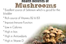 Best Mushroom Recipes / Recipes featuring the healthy and versatile mushroom! / by Following In My Shoes