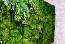 Planted walls