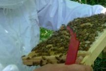 Beekeeping Blogs / A collection of beekeeping blogs that some of you may want to follow. A group board so feel free to add any you choose.