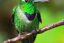 Birds - Mexico/Caribbean/South/Central America