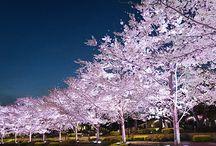 おしゃれしてGO!春のおすすめお花見イベント5 / 桜満開のこの季節、春の服をまとって、今しかできない体験を。お花見クルーズや桜の木の下での野外ライブ、レストランで桜のメニューを楽しんだり。とっておきの5つのイベントをご紹介。