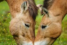 paarden ♡