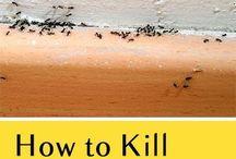ant killing