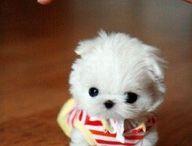 super cute / by Gina Williams