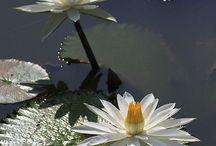 otras flores