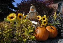 Halloween Ideas / by Heather Brummett