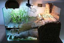 FAMILLE aquarium tortues