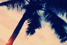 tropical blend