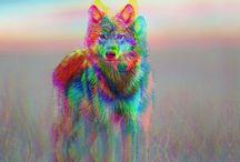 wolves / by Katie Grinnan