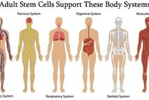 Stem Cell Supplement / To activate your own adult stem cells naturally is completely safe, cost effective and life changing for many people.  Scientists now agree that stem cell stimulation attributes to good health and longevity.