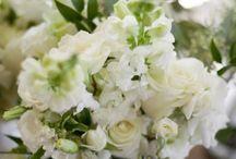 Weddings - White