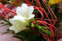 Kvety interiérové, exteriérové, kríky, stromky...