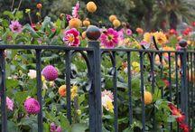 Jardins / by Sophie-Luce Morin