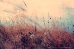 My freedom...
