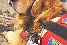 ...... Heroes ....... / Rescuers