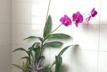 Plants in your Home / Incorporating plants into your home decor is a great way to enhance your living spaces. www.meadowsfarms.com