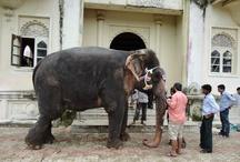 Vanish London Shoot - Elephants and Bollywood.