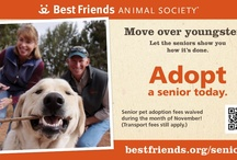 Pet Adoption Marketing Ideas
