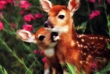 Plants & Animals / Plants and animals in the natural world