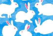 animal – rabbit うさぎ