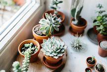 *Plants*