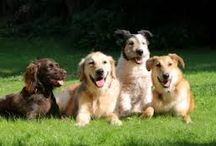 DOGS: Dogs In Training