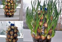 :Growing Vegie Idea's: / Different ways to grow vegies.
