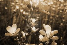Sepia photography / by Barb Pullin