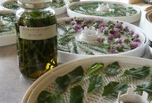 Heavenly Herbs / This is my archive of good finding of info about herbs.