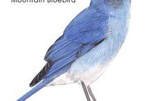 Paint Birds