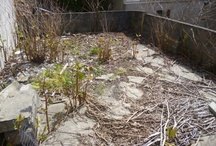 dp weed and pest control / Japanese knotweed specialists