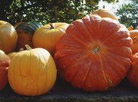 Giant Pumpkins / by Jessica Donoho