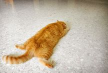 gatti obesi, I love you