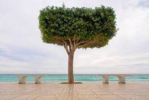 Altea Tree Boulevard / A small stretch of the beach boardwalk in my own town, Altea in Spain.