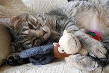 Suki, the cat / Just my cat, Suki