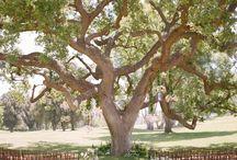 Wedding under a tree