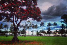 Hawaii / by Susan Brouillette