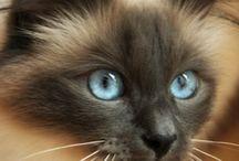Kočičky ❤️