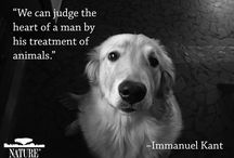 Quotes about pets / Famous or inspiring quotes about pets