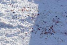 Snow blood / by Pablo Maqueda